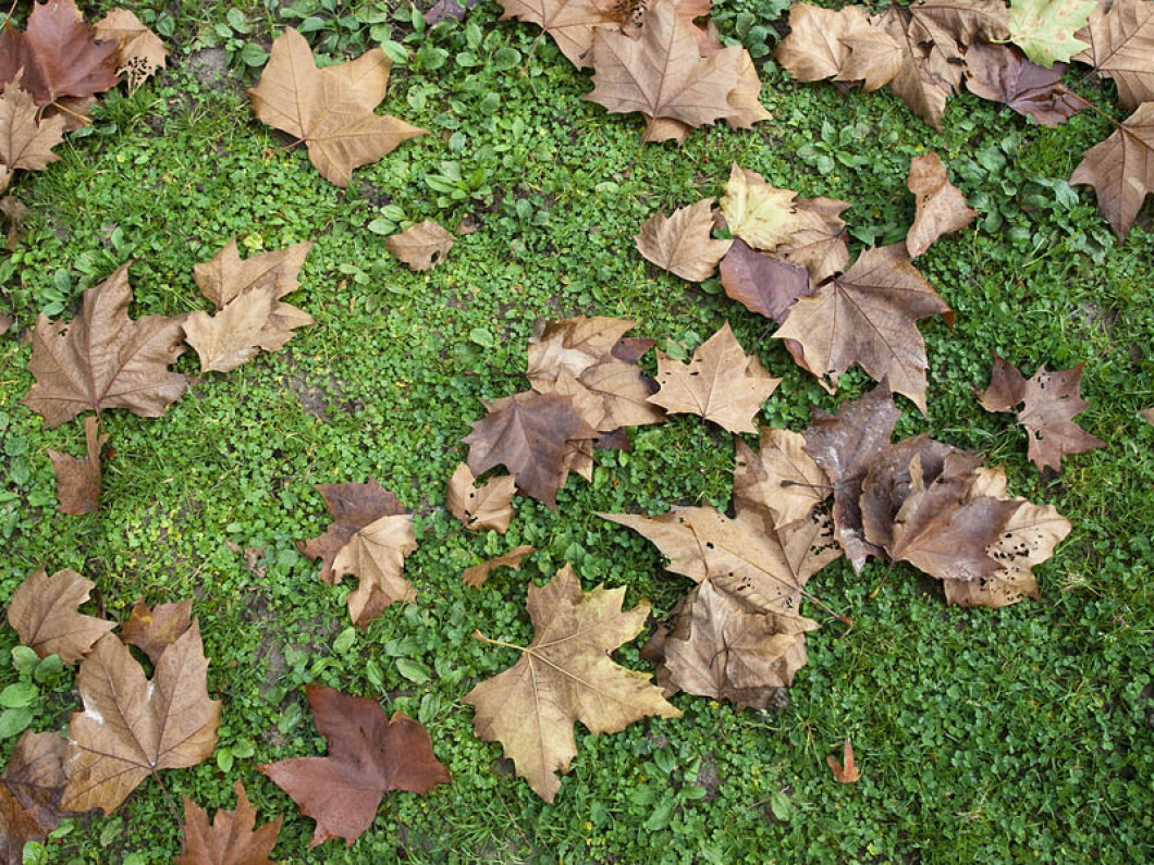 Is Your Lawn Ready for Fall?